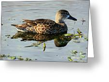Mottled Duck Greeting Card