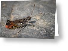 Mottled Grasshopper Greeting Card