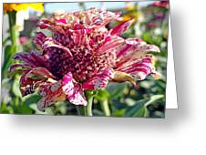 Mottled Pink Cone Flower Greeting Card