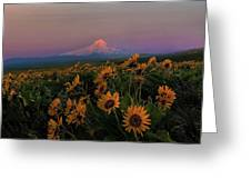 Mount Hood And Balsam Root Blooming In Spring Greeting Card