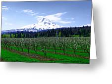 Mount Hood Behind Orchard Blossoms Greeting Card