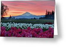 Mount Hood Sunrise Greeting Card