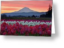 Mount Hood Sunrise With Tulips Greeting Card