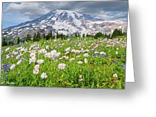 Mount Rainier And A Meadow Of Aster Greeting Card