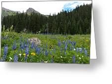 Mount Sneffels Lupine Landscape Greeting Card