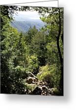 Mount Tamalpais Forest View Greeting Card