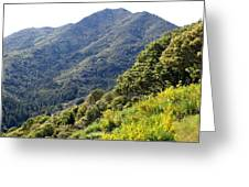 Mount Tamalpais From Blithedale Ridge Greeting Card