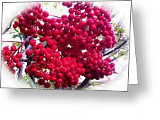 Mountain Ash Berries Vignette Greeting Card