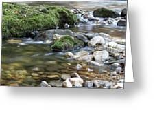 Mountain Creek Spring Nature Scene Greeting Card