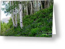 Mountain Flowers And Aspen Greeting Card