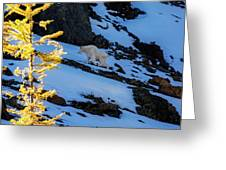 Mountain Goat And Larches Greeting Card