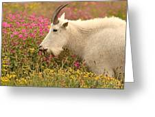 Mountain Goat In Colorful Field Of Flowers Greeting Card