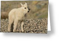 Mountain Goat Kid Greeting Card