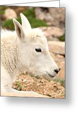 Mountain Goat Kid With Peaceful Gaze Greeting Card