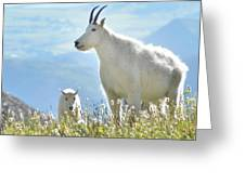 Mountain Goat Momma And Kid Greeting Card