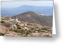 Mountain Goat Mother And Kid In Mountain Home Greeting Card