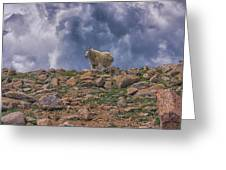 Mountain Goat Overlook Greeting Card