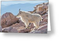 Mountain Goat Takes In Its High Altitude Home Greeting Card