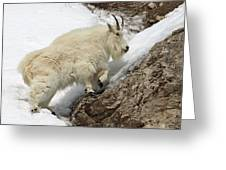 Mountain Goat With Grace Greeting Card