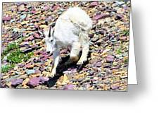 Mountain Goat3 Greeting Card