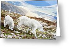 Mountain Goats 1 Greeting Card