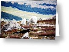 Mountain Goats 2 Greeting Card
