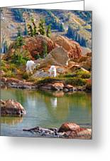 Mountain Goats In Early Fall Greeting Card
