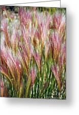 Mountain Grass Greeting Card