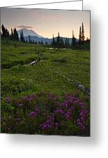 Mountain Heather Sunset Greeting Card