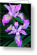 Mountain Iris In Flower California Greeting Card
