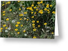 Mountain June Greeting Card