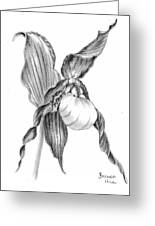 242a4cae7 Mountain Lady Slipper Drawing by Brenda Hill