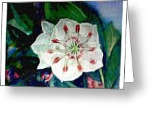Mountain Laurel Blossom Closeup Greeting Card