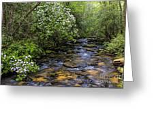 Mountain Laurels Light Up Panther Creek Greeting Card