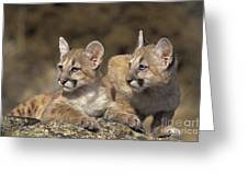 Mountain Lion Cubs On Rock Outcrop Greeting Card