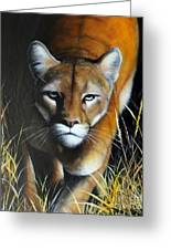 Mountain Lion In Tall Grass Greeting Card