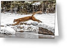 Mountain Lion Leap Greeting Card