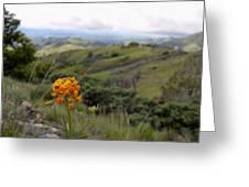 Mountain Side  Greeting Card
