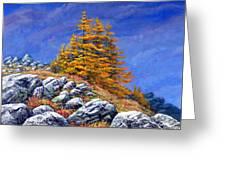 Mountain Tamaracks Greeting Card