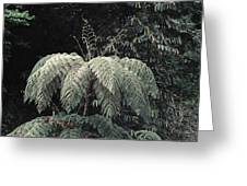 Mountain Tree Greeting Card