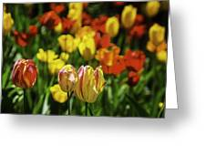 Mountain Tulips Greeting Card