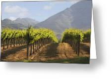 Mountain Vineyard Greeting Card
