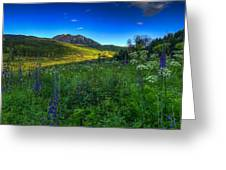 Mountain Wildflowers And Light Whispers Greeting Card
