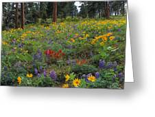 Mountain Wildflowers Greeting Card