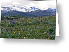 Mountain Wildfowers Greeting Card