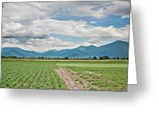 Mountains And Fields Greeting Card