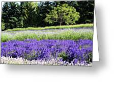 Mountainside Lavender Farm Greeting Card