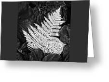 Mounts Botanical Garden 2365 Greeting Card