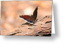 Mourning Cloak Butterfly Greeting Card