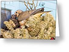Mourning Dove And Chick Greeting Card
